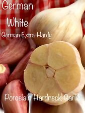 German White Garlic Bulbs - 1/2 pound Porcelain Hardneck Garlic to eat or plant