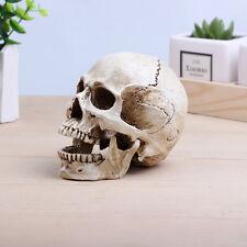 Small  HuMan Skull Replica Resin Model Medical Realistic White Size 11x7x8.5cm