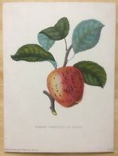 """Antique Alexandre Bivort """"Pomme Pigeonnet De Rouen"""" Print 9""""x12"""" - Apple"""