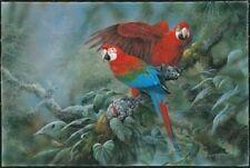 Gamini RaTNAVIRA Parrot Print Green Wing Macaws
