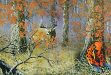 Caught Napping by Ray Whitson Wildlife Print Deer VCS