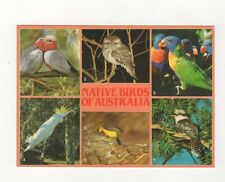 Native Birds of Australia Postcard 629a