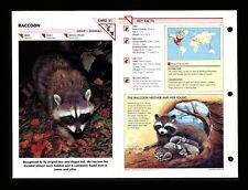 Raccoon Wildlife Fact File Mammals Animal Card Home School Study 1.31