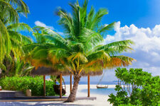 Palm Tree Beach Seascape Home Decor Picture Canvas Print Painting Wall Art Gifts