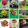 200Pcs Rose Tree Seeds Potted Bonsai Flower Plant Garden Balcony Decor