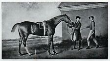 C4578 Cavallo purosangue inglese - Stampa d'epoca - 1931 Vintage print