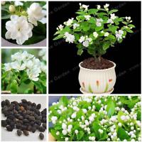 Potted Plants Jasmine 20 Pcs Seeds Bonsai Jasminum Sambac Flowers Home Garden U