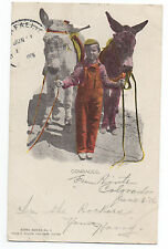 """1906 Embossed Postcard of Boy holding two Mules """" Comrades """" Colorado"""