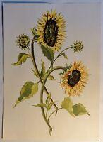 "Aquarell von C.E.Dammann, Hamburg: ""Sonnenblume"" - monogrammiert"