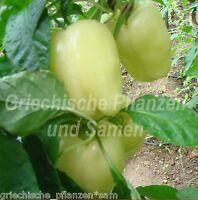 🔥 🌶️ WHITE WONDER * Paprika weiss süß*Chili *SELTEN*10 Samen