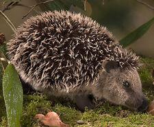 Hedgehog mohair collectable soft toy - Kosen / Kösen - 26cm - 6190