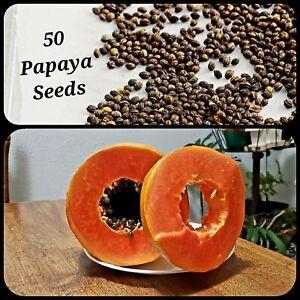 50 Papaya Seeds, Proven Sweet, Healthy, Free Shipping