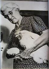 PHOTO USA OEUF DE POULE GEANT 1946 e36
