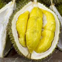 5 PCS Seeds Durian Tree King Of Fruit Tropical Giant Rare Plants Bonsai 2019 New