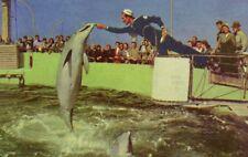 WWII US Sailor Marine Studios, FL Dolphin Crowd Vintage Postcard F14