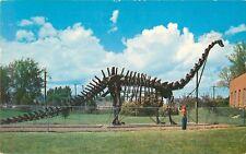 1959 Diplodocus Replica Dinosaur Skeleton, Vernal, Utah Postcard