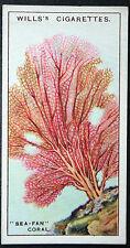 SEA FAN CORAL    Superb Original 1920's Vintage Colour Card