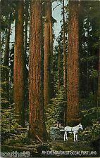c1910 An Oregon Forest Scene, Portland, OR Postcard