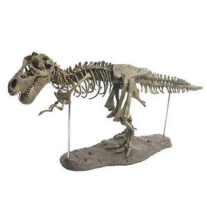 4D Dinosaur Skeleton Model Assembly DIY Animal Collector Skeleton Statue