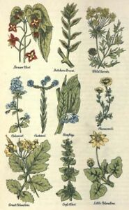Herbal Remedies Herbs Natural Cures Recipes Herbalist Plants Guide 10 Books ~DVD