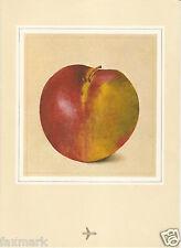 Kurt Wirth Art           The Apple               Featured on SwissAir 1978 Menu
