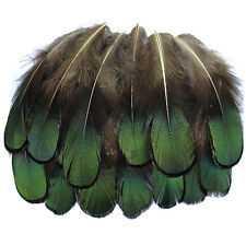 20 Pcs Green Lady Amherst Bronze Pheasant Plumage Feathers inches long 1.5- T4P8