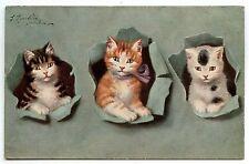ILLUSTRATEUR SPERLICH .CHAT. CAT. KATZE.  CHATON. KITTEN.