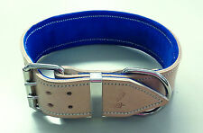 X-Large Rawhide Leather Dog Collar with Royal Blue Suede Padded Inner Lining