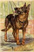 German Shepherd - MATTED Dog Art Print - German / NEW U