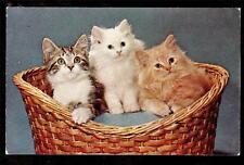 c1960 vintage chrome membership committee in basket kittens cat postcard
