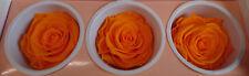 3 x Rose Echte Rose orange lange haltbar gemacht verwelkt nicht