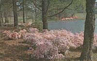 LAM(W) Pine Mountain, GA - Callaway Gardens
