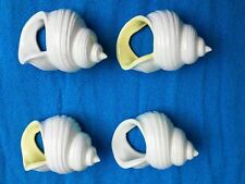 """Napkin Ring Holders Set of 4 Sea Shell Conch White Porcelain about 3"""" long each"""