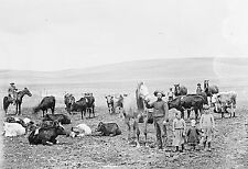 "Cowboys, Family ,RANCH, Cattle, cows, Old Photo 16""x11"" PHOTO, Western life"