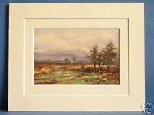 ABBEYLEIX (NEAR) QUEENS CO LEINSTER IRELAND VINTAGE DOUBLE MOUNTED PRINT c1920