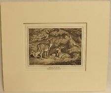 Does and Fawns, Copper Plate Engraving, Howitt 1812