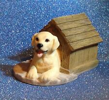 LEONARDO GOLDEN LABRADOR IN A KENNEL