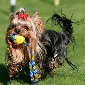 Pet Dog Puppy Play Rope Ball Throw Pet Toy Fetch Chew Bite Outdoor Training FB