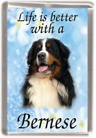 """Bernese Mountain Dog Fridge Magnet """"Life is better with a Bernese"""" by Starprint"""