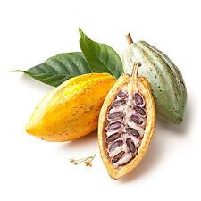 40Pcs Cocoa Fruit Seeds Tree Germination Fresh Home Garden Plant Decoration Pret