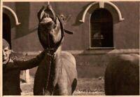 FOTO DEL 1939 - MILITARI REGIO ESERCITO ARTIGLIERIA CAVALLO RIDENS  - NOVARA -