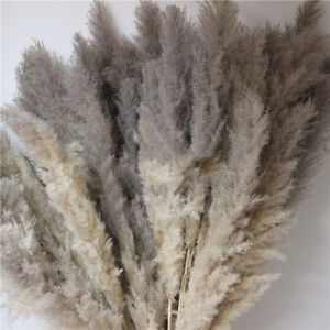 Natural Dried Pampas Grass Gray Reed Flower Bunch Bouquet Wedding Party Decor