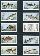 "BARRATT 1962 ""FISH AND BAIT"" TRADE CARDS - PICK YOUR CARD"