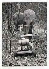 """PHOTO PRESSE """"Éléphant ça tond"""" AFP 1969 Curiosité Drôle Insolite Animal Thoiry"""