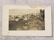 Vintage 1910-30 Foto Real Postal Postal: camada de gatitos jugando afuera de casa