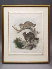 Original Daniel Giraud Elliot Hand Colored Cat Lithograph Felis Catus  J. Wolf