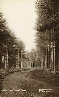 Vintage Hampshire Real Photo Series Postcard, New Forest Pines T. Harding JX0
