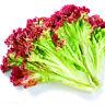 Heirloom Vegetable Seeds Non-GMO Organic Survival Garden Plant Free Shipping