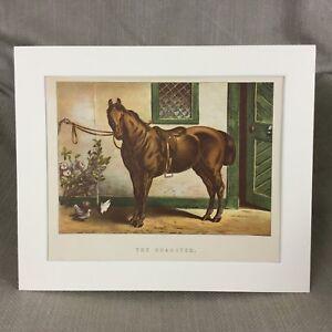 1895 Horse The Roadster Equestrian Art Equine Antique Chromolithograph Print