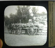 ANTIQUE PHOTO COTTON INDUSTRY MISSOURI FASHION KANSAS CITY ST. LOUIS SPRINGFIELD